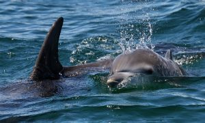 Dolphin Eco Tour in Jervis Bay