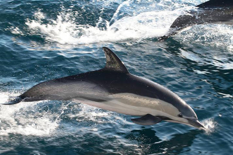 How Do Whales and Dolphins Communicate?