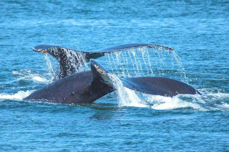 Whale Watching Cruises: Our Most FAQ