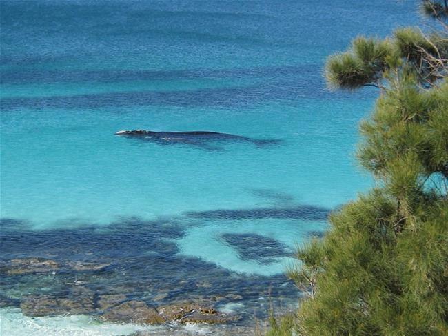 Dolphins Tours Bowen Island