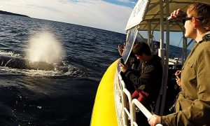 Jervis Bay Whale Eco Cruise