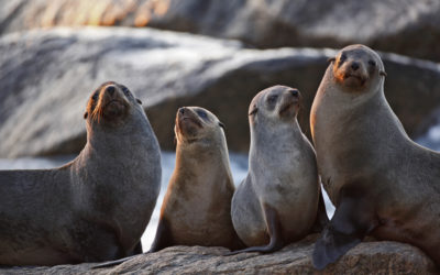 Seals & Sea Lions – What's the Difference?