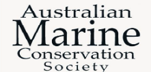 marine conservation whales