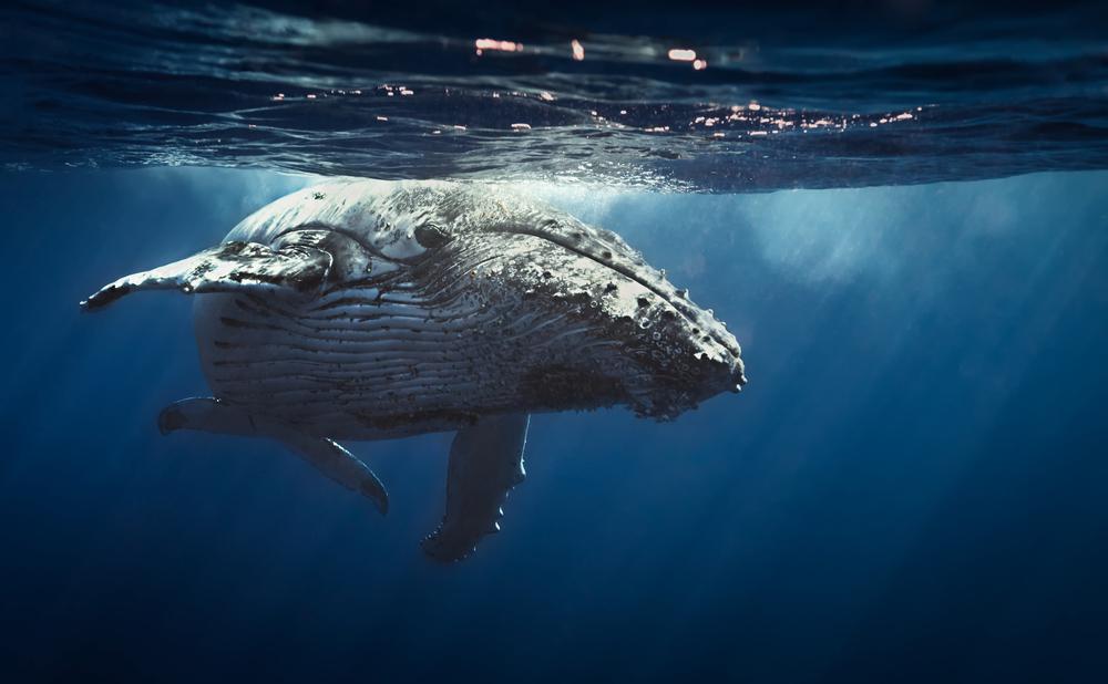 where do blue whales live