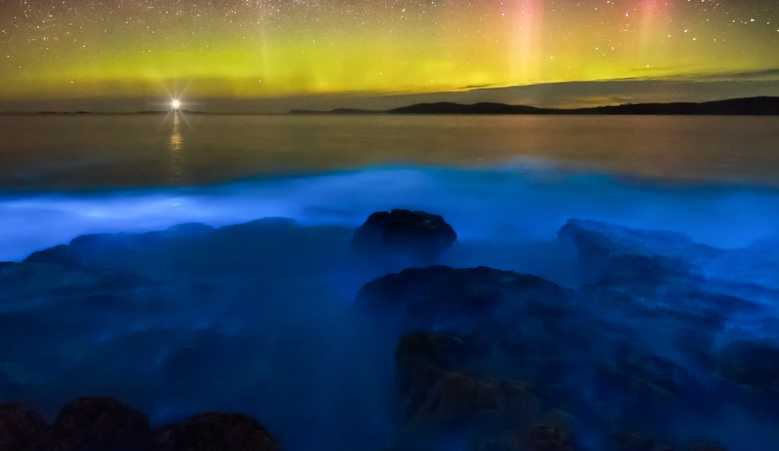 Bioluminescence at  Jervis Bay: August 2018