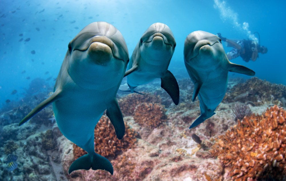 dolphins smiling